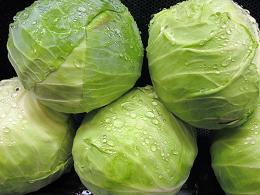 cabbagegreen_pcojen
