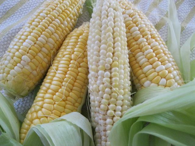 corn_pcojen