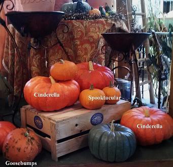 pumpkinslabeledlr_pcojen