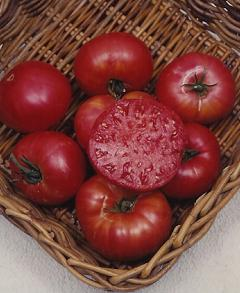 tomatomortgagelifterlr_pcoballhorticulturalcompany