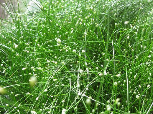 grassesfiberoptic_pcojen