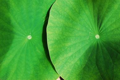 lotus_pcoandrewsdad