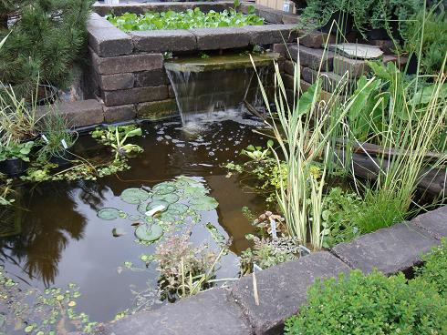keeping it clean a water garden should not be as clear as a swimming pool but instead should be clear enough to see the bottom - Water Garden Plants
