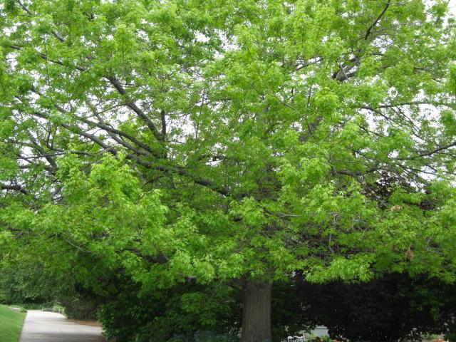 treegeneric2_pcojen
