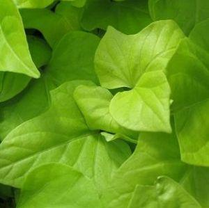 Accent Foliage