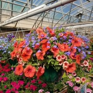 Hanging Baskets & Containers