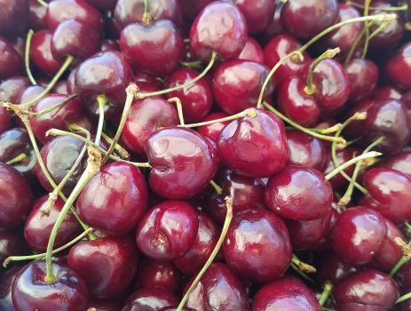 Cherries Are Some Of The Easiest Fruit Trees To Grow In Colorado They Hardy Naturally Disease And Insect Resistant Offer Beautiful Bark